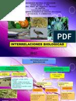 clase 6 interrelaciones biologicas.ppt