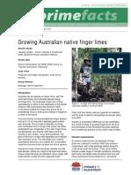Growing Australian Native Finger Limes 2