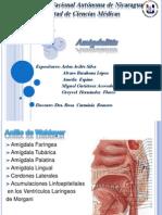 Amigdalitis final.pptx