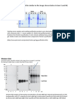 SDS-PAGE+Western blot expected results (1)