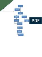 Organigrama Raducu 3.1.docx