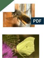 Insektenhotel.pdf