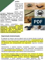 Introdução_ao_Filo_Arthropoda.pdf