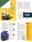 Julie Kendrick for MNSights Magazine -- Animal Welfare
