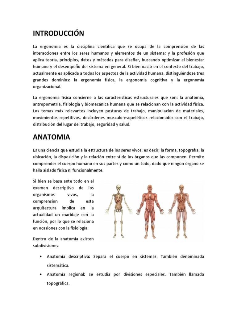 Asombroso Cómo Se Relacionan La Anatomía Y Fisiología Imagen ...