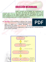 Anatomia microbiana 2.ppt