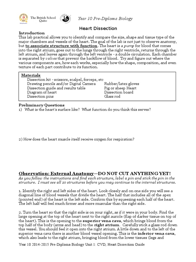worksheet Sheep Heart Dissection Worksheet heart dissection lab report guide atrium heart
