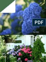1-Autumn Flowers-5-Hydrangea.pps