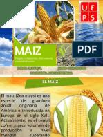 EL MAIZ.pptx