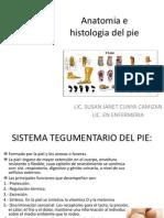 Anatomia e histologia del pie 01 - copia.ppt