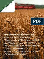 Preparacion Toma de Muestras Tarjetas FTA.pdf