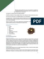 Recetas Tes.pdf