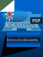 2_1_celulas_eucariotes.pdf