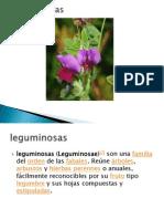 Leguminosas.pptx