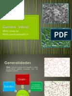 Vibrio.pptx