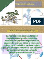 Reproducción Asexual.ppt