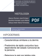HISTOLOGIA TEGUMENTARIO.pptx