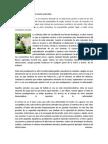 Urolitiasis Obstructiva del carnero y del chivo.docx