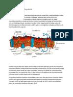 Mekanisme Transpor Membran Plasma
