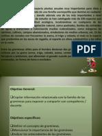 Gramineas.pptx