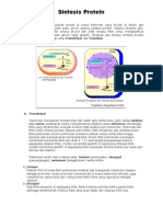 Sintesis_Protein Dan Lemak