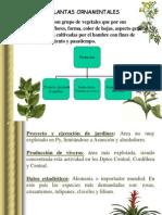 Unidad IXPLANTAS ORNAMENTALES.ppt