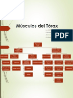 Músculos del Tórax.pptx