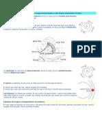 Nociones básicas para interpretar un mapa meteorológico o del tiempo.docx
