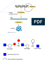Acizi nucleici FDI