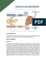 rutas metabólicas 1.docx