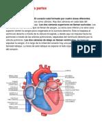 El corazón es un músculo.docx