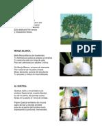 poemas de guatemala de niños.docx