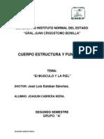 CUERPO ESTRUCTURA Y FUNCIONES I.docx