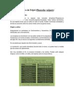 Phaseolus vulgaris .docx