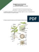Examen-Fundamentos de fitotecnia.pdf