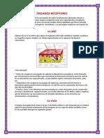 ÓRGANOS RECEPTORES.docx