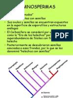 clase_gimnospermas_2014.pdf