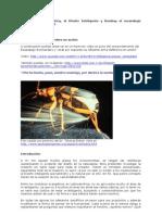 escarabajo bombardero Parte 1