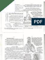Timusul Anatomie LP