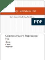 Patologi Reproduksi Pria