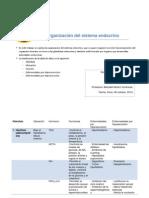 Organización del sistema endocrino.docx