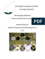 P. 4 SIEMBRA Y AISLAMIENTO DE MICROORGANISMOS (1).docx
