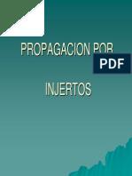 PP.INJERTOS.pdf