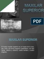 maxilar_superior.pptx