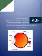 El globo ocular.docx