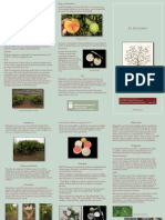 guayabo6.pdf