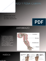 Anatomia de la region del antebrazo y fosa cubital.pptx