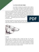 LA EVOLUCIÓN DEL PERRO.docx