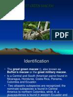 Greet Green Macaw Ingles