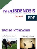 actinobacilosis.pptx